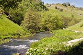 Thumbnail image of Dovedale near Ashbourne, Derbyshire