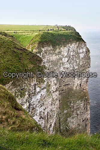 photo showing Bempton Cliffs, East Riding Of Yorkshire