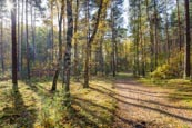 Autumn Forest At Basdorf, Barnim, Brandenburg, Germany
