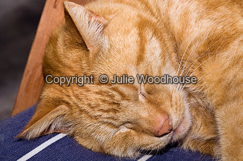 photo showing Sleeping Ginger Cat